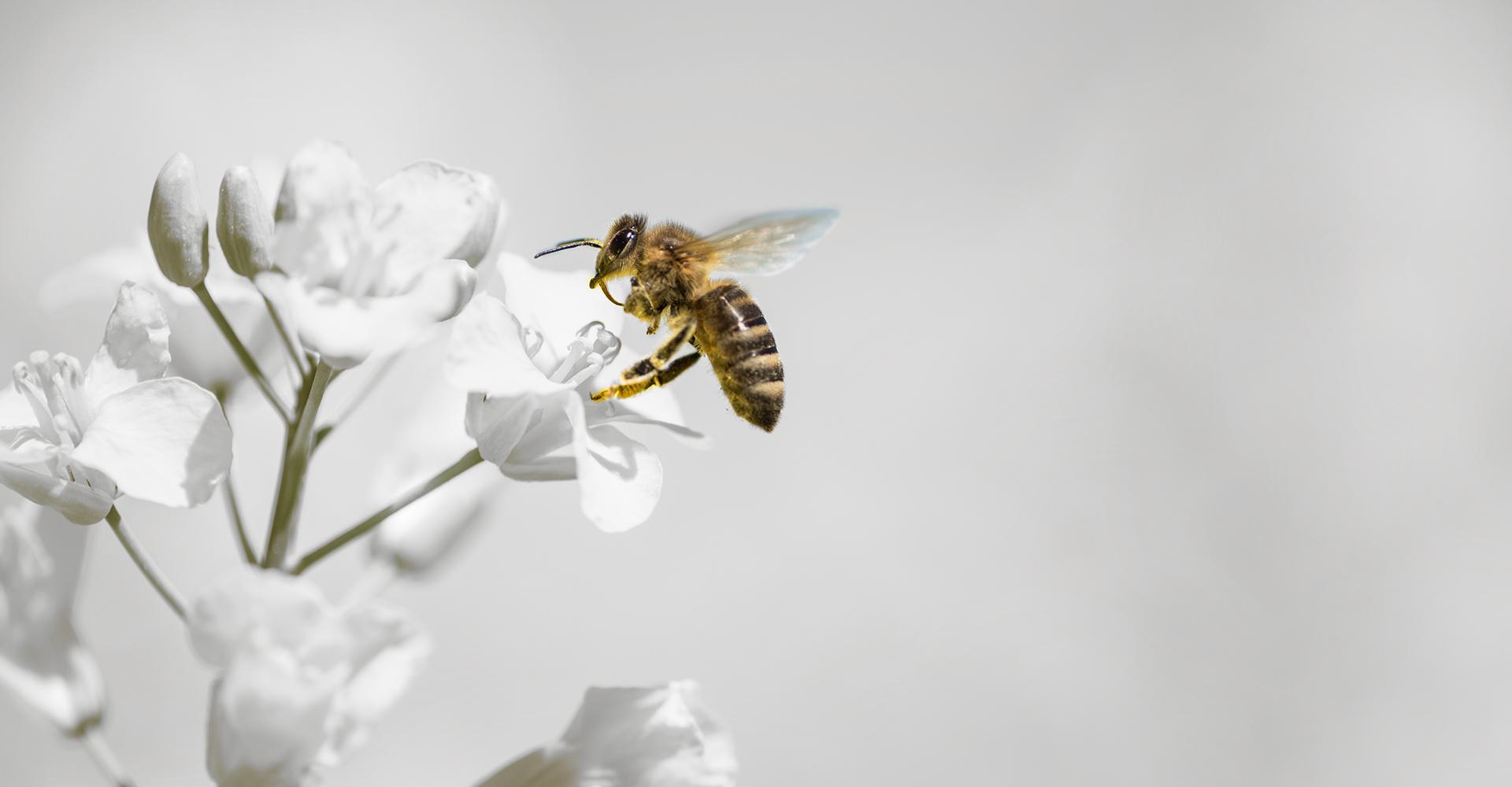 Diofarm Bee